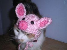 CROCHET CAT PET HATS - Pesquisa Google