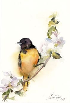 Baltimore Oriole Bird Original Watercolor Painting, bird on a blooming branch, yellow black bird art, painting of bird Watercolor Hummingbird, Watercolor Bird, Watercolor Animals, Watercolor Paintings, Original Paintings, Bird Tattoo Sleeves, Lace Tattoo, Tattoo Black, Baltimore Orioles Birds