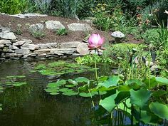 Small Backyard Ponds | Garden Pond Pictures | Pond Photos | Pictures Garden Ponds