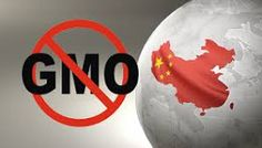 China Destroys 3 US Shipments of Genetically Modified Corn