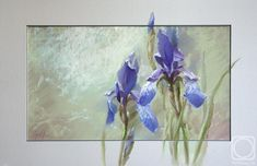 Abramova Olga. Porcelain irises