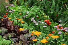 10 Flowers To Grow With Vegetables - Companion Planting: How To Deter Pests and Encourage Beneficial Insects