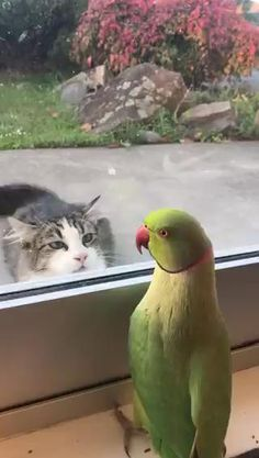 Funny Birds, Cute Funny Animals, Cute Baby Animals, Funny Dogs, Animals And Pets, Cute Cats, Pretty Cats, Funny Humor, Memes Humor