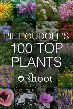 , Piet Oudolf is a world-famous garden designer, nurseryman and writer. , Piet Oudolf is a world-famous garden designer, nurseryman and writer. In he singled out the 100 plants he won't do without and we have them all . Prairie Planting, Prairie Garden, Meadow Garden, Planting Plan, Dream Garden, Garden Design Plans, Cottage Garden Design, Cottage Garden Plants, Cottage Gardens