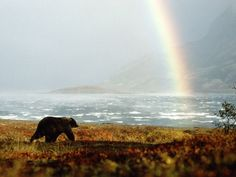 Alaska - Alaskan Wildlife - Rainbow - Beautiful Vacation Locations - Bears