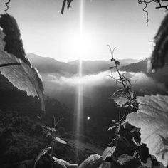 The Sun rising on our Vineyards. #Douro #Portugal  Photo by @tiagocartageno ---------------- O Sol a nascer nas nossas Vinhas. #Douro  #visitportugal #tlpicks #tasteintravel #getlostclub #lonelyplanet #natgeo #brownmeetsworld #travelnow  #worldplaces #wonderful_places #Places_wow #EarthPix #chasingtheworld #amazingplacestovisit #BeautifulPlaces #EarthMagazine #Globe_Travel  #TravelAwesome #Super_Portugal #cooltravel #TravelBreak #darlingescapes #ilovedouro by quintavilarachel