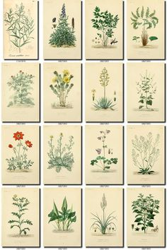 LEAVES Collection of 258 vintage images vegetable botanical High resolution digital downloa Retro Images, Vintage Pictures, Vintage Images, Vintage Cards, Logo Fleur, Logo Floral, Large Scale Art, Antique Maps, Delphinium