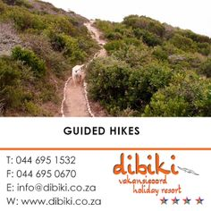 There are a lot of things to do in and around Mossel Bay and Dibiki Holiday Resort: Contact us for an adventure package which include accommodation and activities like horse riding, kayak fishing, game drives, etc. #activities, #hikes #guidedhikes