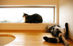 7 conseils pour rendre son chat heureux