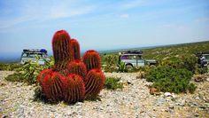 Real de Catorce. El desierto y los Willis de fondo. Una aventura maravillosa!! Cacti And Succulents, Cactus Plants, Desert Pictures, Unusual Plants, Agaves, Outdoor Spaces, Flora, Nature, Traditional