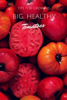 Tips for Growing Big, Healthy Tomatoes --> http://www.hgtvgardens.com/tomatoes/12-tomato-tricks-and-tips?soc=pinterest