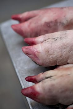 how to clean pig feet before cooking