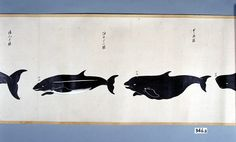 くろ鯨 沖ごとう鯨 拡大