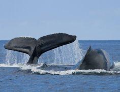 Naturaleza en estado puro: ballena