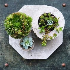 plants and concrete