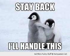 http://funnyasduck.net/wp-content/uploads/2012/11/funny-stay-back-baby-penguins-pics.jpg