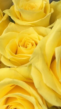 Shades Of Yellow Color Names For Your Inspiration aesthetic yellow Yellow Aesthetic Pastel, Rainbow Aesthetic, Aesthetic Colors, Spring Wallpaper, Trendy Wallpaper, Wallpaper Backgrounds, Pastel Wallpaper, Pastel Lockscreen, Rose Wallpaper