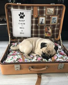 Always keep your furry friend at Happy & Healthy. - Always keep your furry friend at Happy & Healthy. Cute Pug Puppies, Cute Pugs, Dogs And Puppies, Funny Pugs, Shih Tzu Hund, Dog Bedroom, Bedroom Ideas, Diy Dog Bed, Pug Love