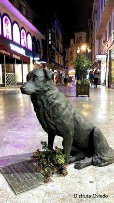 Rufo,un perro que estaba por las calles, en los 80 y 90 en Oviedo.Tiene su escultura.