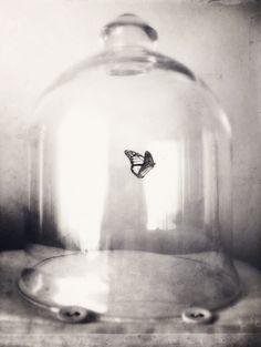 """Prender seus sonhos, ideias, questionamentos é semelhante a aprisionar uma linda borboleta em uma """"gaiola de vidro"""".   FJÄRILEN & GLASKUPAN"""