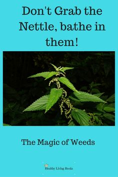 Wild about plants that grow wild! More about the magic of 'weeds' here: http://healthylivingbooks.org/2017/08/05/the-magic-of-weeds/