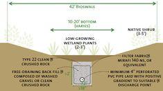 Bioswales   GrowNYC