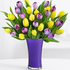"""ProFlowers.com ~ Celebrate the season with 30 yellow and purple blooms that burst open before your very eyes. To allow these beautiful flowers to last much longer, they are shipped fresh, budding, and ready to bloom.   •30 purple and yellow tulips •Measures approximately 14"""" tall •Item #30068092 Visit @ http://www.proflowers.com/easter-flowers-est?REF=PFPFRE16MAR23D2NOBXXXXA25PSLUP&CustId=&PRID=RE14CPQ&sd=&navContent=T%3aEaster%3a&navLocation=T%3a1-9%3a"""