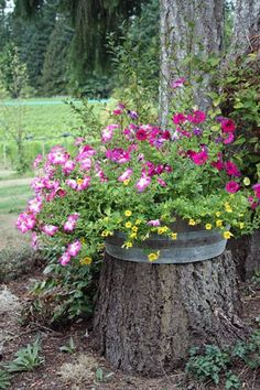 Tree Stump For Garden Art. you can use tree stumps in your garden as planters and they will give you a special charm that everyone will be admired. Garden Trees, Lawn And Garden, Garden Pots, Fairies Garden, Succulents Garden, Flowers Garden, Large Planters, Flower Planters, Tree Stump Planter