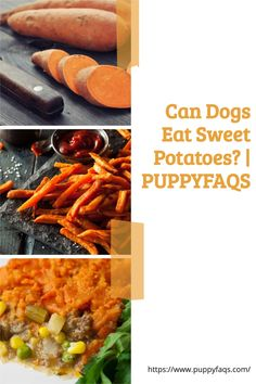 Visit here to check out can dogs eat sweet potatoes on PuppyFAQS Blog! If you are looking to find out if it's safe to give your puppy mashed or raw sweet potatoes, then this is the blog post for you! For the definitive guide on Can Dogs Eat Sweet Potatoes, click to be directed to the PuppyFAQS blog. If you still need help after reading our article on whether or not your pooch can eat sweet potatoes, please leave us an email at liz@puppyfaqs.com and we'll get back as soon as possible. Sweet Potato Benefits, Raw Sweet Potato, Sweet Potato Dog Treats, Sweet Potato Skins, Cooking Sweet Potatoes, Sweet Potatoes For Dogs, White Potatoes, Dog Eating, Eating Raw