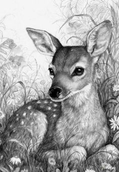 Jewerly Illustration Design Beautiful New Ideas Animal Paintings, Animal Drawings, Art Drawings, Drawing Sketches, Sketching, Deer Art, Beautiful Drawings, Wildlife Art, Painting & Drawing