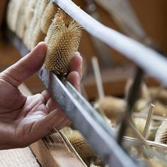 It's the final day of - continuing our celebration of - today we're featuring the finishing process. Teasels are expertly used in the finishing process to perfect the unique distinctive ripple finish seen in our woven cashmere