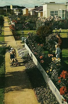 Suburban street in Victoria, Australia National Geographic, February 1971 Melbourne Australia, Australia Travel, Australian Photography, Victoria Australia, Historical Pictures, Vintage Photographs, National Geographic, Old Photos, Nostalgia