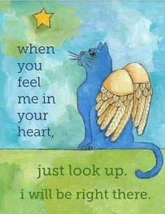 Cuando me sientas en tu corazón. Solo mira arriba, yo estaré allí. Cat Angel, Kitty Angels, Pet Grief, Fat Cats, Cats And Kittens, Crazy Cat Lady, Crazy Cats, Animals And Pets, Cute Animals
