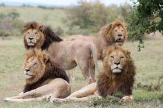A meeting of the manes . . .