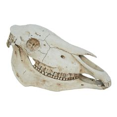 This polyresin and stone powder Moes Home Collection Horse Sculpture boasts an eclectic faux horse skull design. Earthy Style, Rustic Style, Horse Skull, Bohemian Furniture, Moe's Home Collection, Horse Sculpture, Animal Skulls, Contemporary Furniture, Urban Furniture