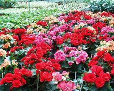Jardim, paisagismo, flores, jardim sempre florido