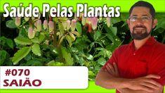 Saúde Pelas Plantas - Saião [bronquite, gastrite, cicatrizante, hiperten...