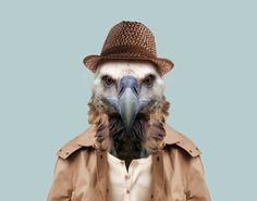 Griffon-Vulture---Gyps-Fulvus-copia