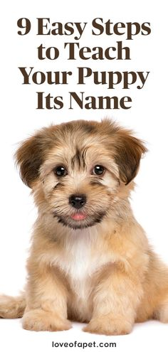 Cute Pet Names, Puppy Names, Dog Names, Puppy Training Schedule, Training Your Puppy, Puppy Find, New Puppy, Best Puppies, Dogs And Puppies