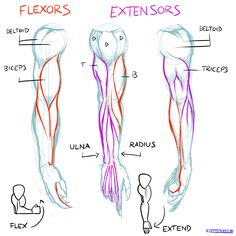 anatomy draw - Buscar con Google