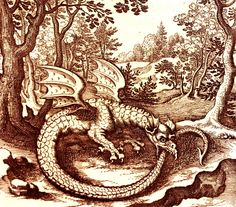 Eclectic historic science and art images from rare books and prints Ouroboros, Grace Art, Tarot Astrology, Year Of The Dragon, Merian, Occult Art, Dragon Statue, Fantasy Dragon, Weird Creatures