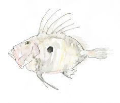 fish john dory John Dory Fish, Fish Illustration, Underwater Creatures, Important Things In Life, Fashion Art, Moose Art, Objects, Inspire, Crafty