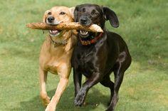 The Best Dog Breeds For Running @LIVESTRONG