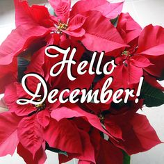 #december #instagram #beautiful Hello December Pictures, Hello December Tumblr, December Baby, Hello November, Seasons Months, Months In A Year, Christmas Quotes, All Things Christmas, Christmas Greetings