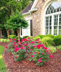 Savvy Southern Style...landscaping Idea, Love The Bright Vs Dark Green,