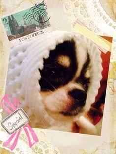 キュンたんでしゅ♪☆キュンたん http://ameblo.jp/ichiey/entry-12065012072.html