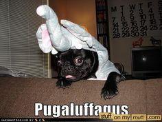 I am a puggaluffagus | Stuff On My Mutt
