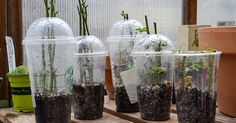 I have tried several methods of rooting rose cuttings.  Some were complete fails, like using potatoes and others were much more successful and easier for me.  I…