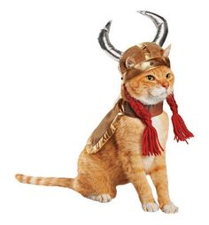 20 Of The Funniest Cats In Costumes - Page 5 of 5