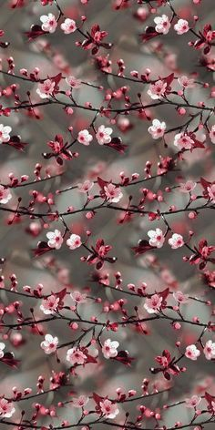 Wall Paper Nature Blumen Ideas For 2019 Tumblr Wallpaper, Floral Wallpaper Iphone, Iphone Background Wallpaper, Colorful Wallpaper, Aesthetic Iphone Wallpaper, Flower Wallpaper, Aesthetic Wallpapers, Cherry Blossom Wallpaper, Floral Wallpapers